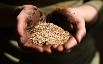 Weizenallergie / Weizenunverträglichkeit- was ist dran an dem Hype